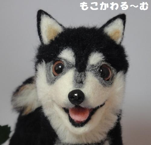 黒柴ちゃん3