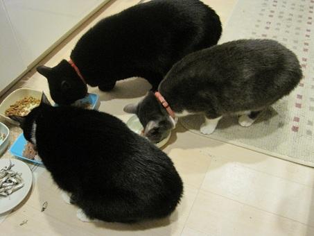 2011初猫缶