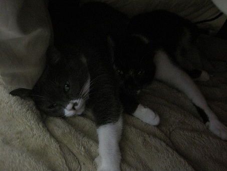 2011こたつの猫