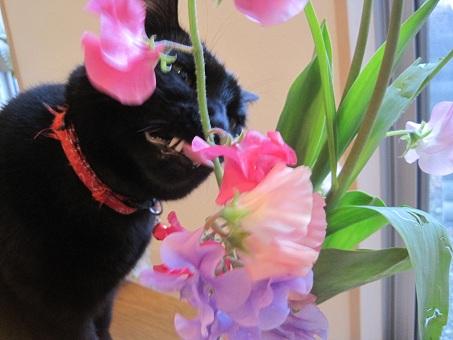 春の花20110203