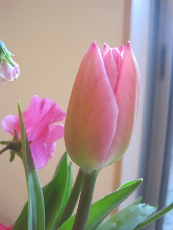 春の花20110202