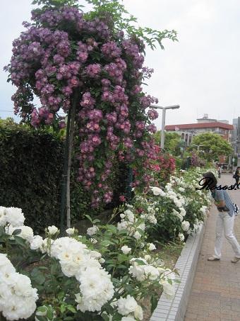 2011福山ブルーランブラー