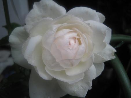 20110529ボレロ1