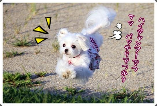 夕映え公園0830-3