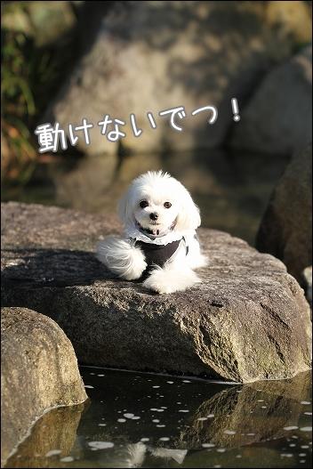 香川用水公園1-6