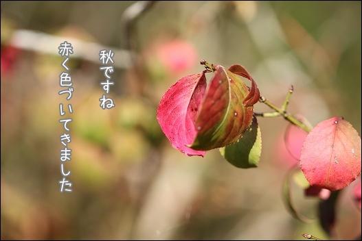香川用水公園1-8