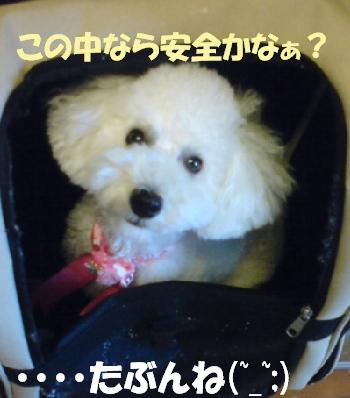 ボックスみゆちゃん