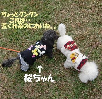桜ちゃんとみゆ