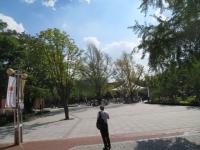 マロニエ公園
