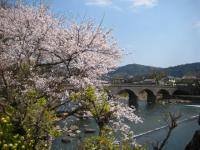 眼鏡橋と桜