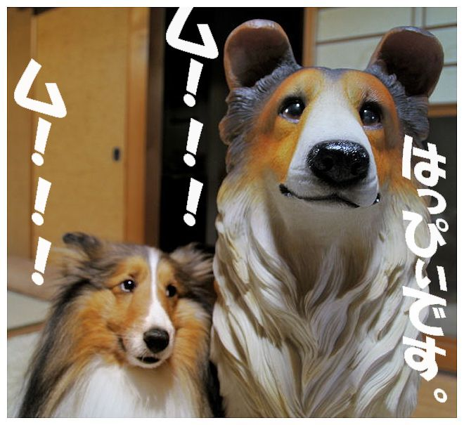 DSC_468600-11.jpg