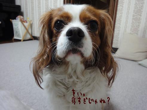 004_20110521085413.jpg