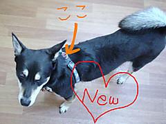 Kyouwaku2