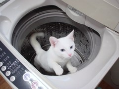 Wash2