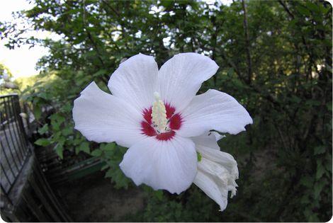 7.17お花