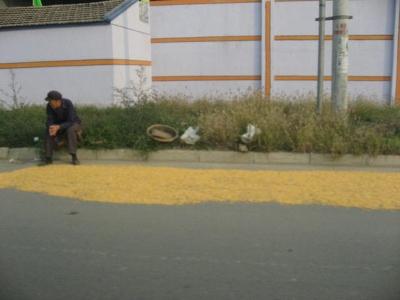 中国農産物