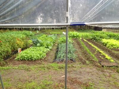11.17家庭菜園