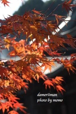 11.24阿蘇神社13