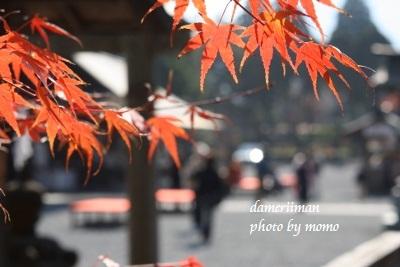 11.24阿蘇神社14