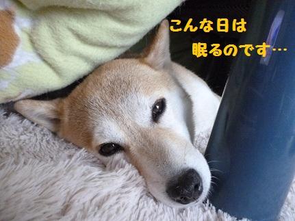 おやすみー!