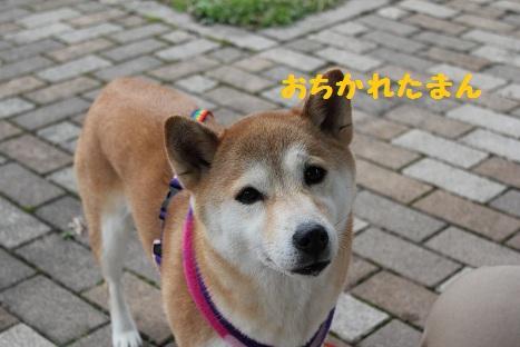 おちかれ0425