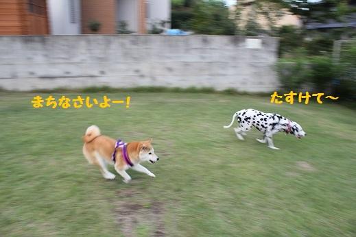 うめちゃんと走りっこ②