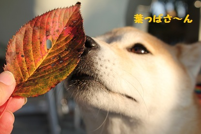 葉っぱクンクン