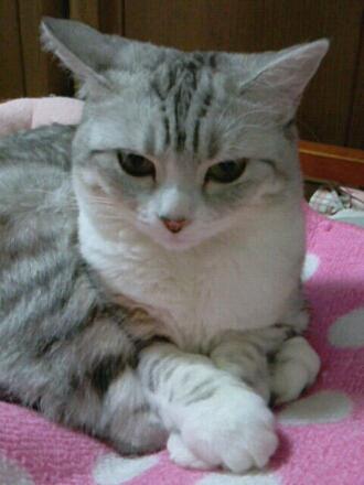 fc2blog_2012111619544047f.jpg