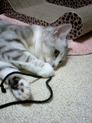 fc2blog_20121122194842f45.jpg