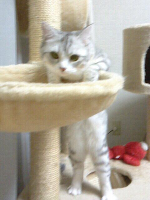 fc2blog_2012113021102207b.jpg