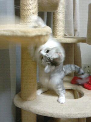 fc2blog_20121130211110d54.jpg