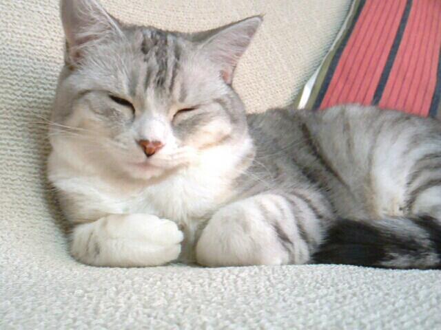 fc2blog_20121205200151a6f.jpg