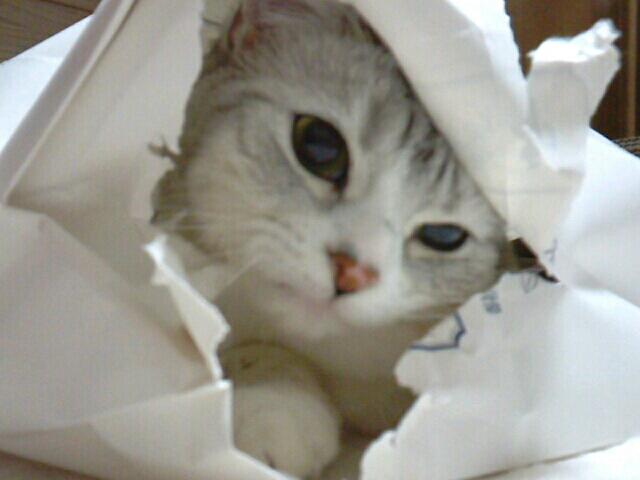 fc2blog_20121210224918c29.jpg
