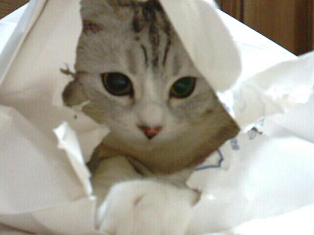 fc2blog_20121210224943e55.jpg