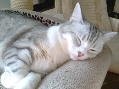 fc2blog_201212162105404d5.jpg