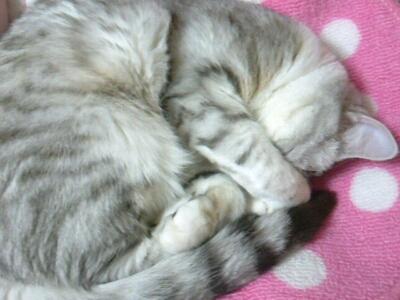 fc2blog_2012121819260134d.jpg