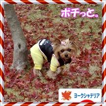 2012-12-03-12-38-05_photoバナー