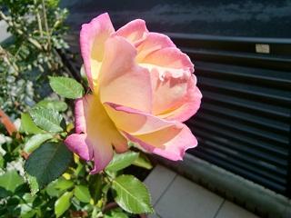PICT0003_20111126120059.jpg