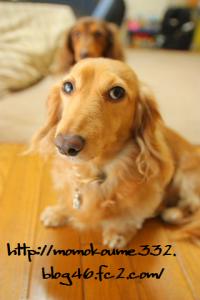 ブチャイク モモ☆
