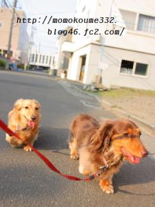 2ワン一緒♪