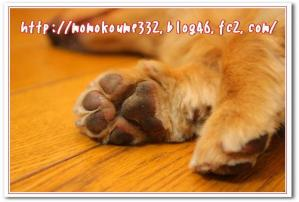 モモの足☆