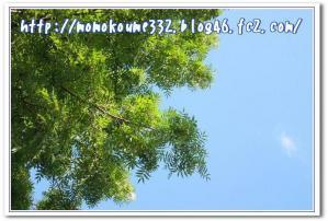 緑と今日の空