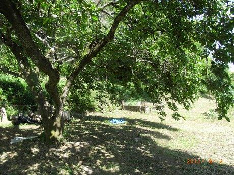この木なんの木柿の木