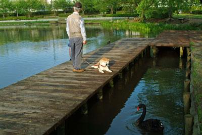 DSCF2157犬と黒白鳥
