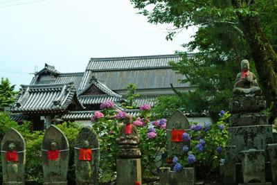DSCF3559南僧坊地蔵アジサイ