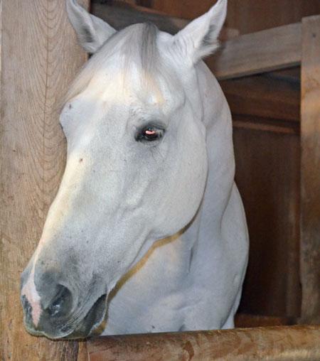 DSC_0126神馬