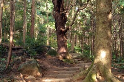 DSC_0643ハイキング道2