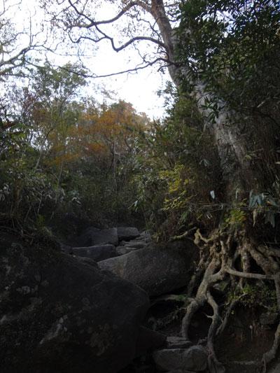 DSC01575岩・根の道10