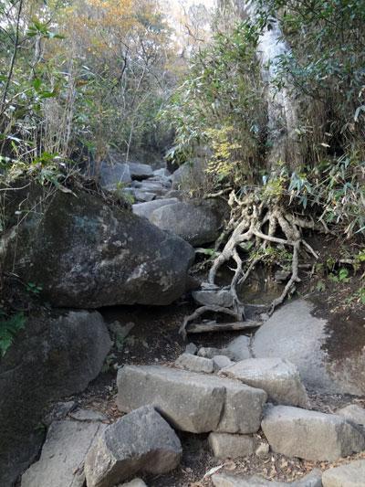 DSC01572岩・根の道9