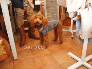 blog20121110a.jpg